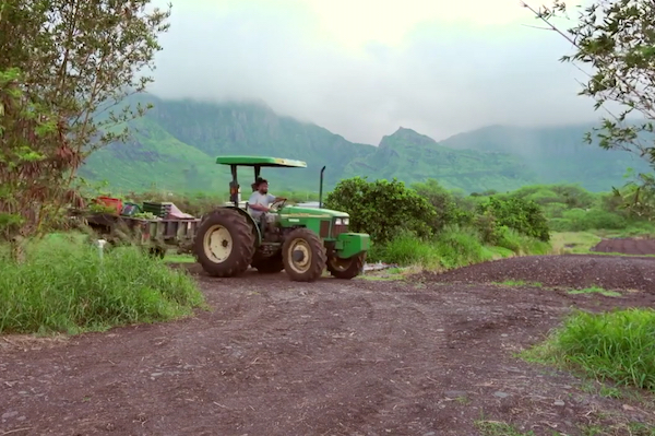 A tractor on a lush green farm